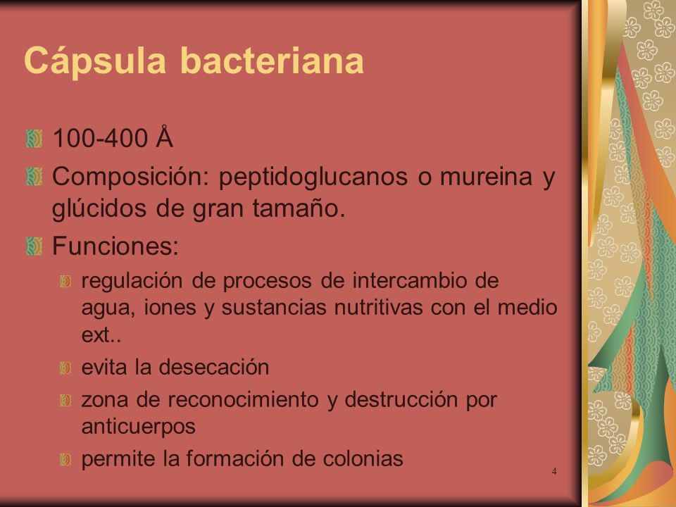Cápsula bacteriana 100-400 Å. Composición: peptidoglucanos o mureina y glúcidos de gran tamaño. Funciones: