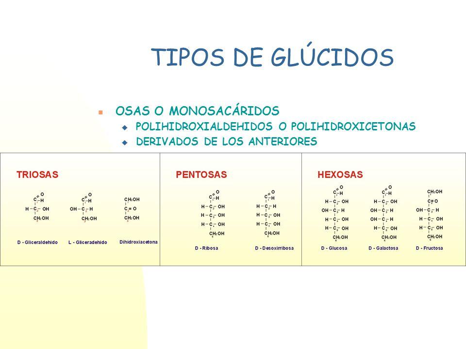 TIPOS DE GLÚCIDOS OSAS O MONOSACÁRIDOS ÓSIDOS