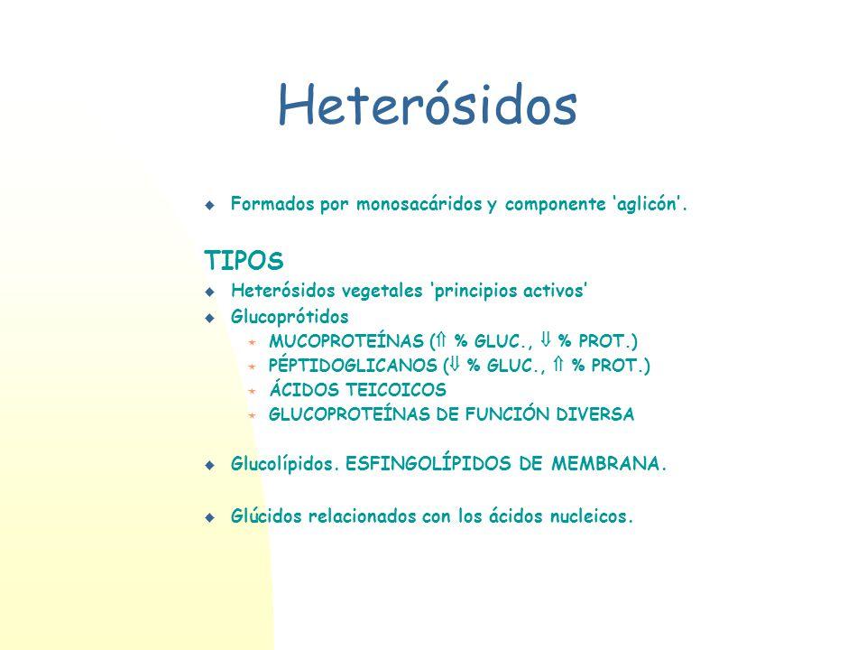 Heterósidos TIPOS Formados por monosacáridos y componente 'aglicón'.
