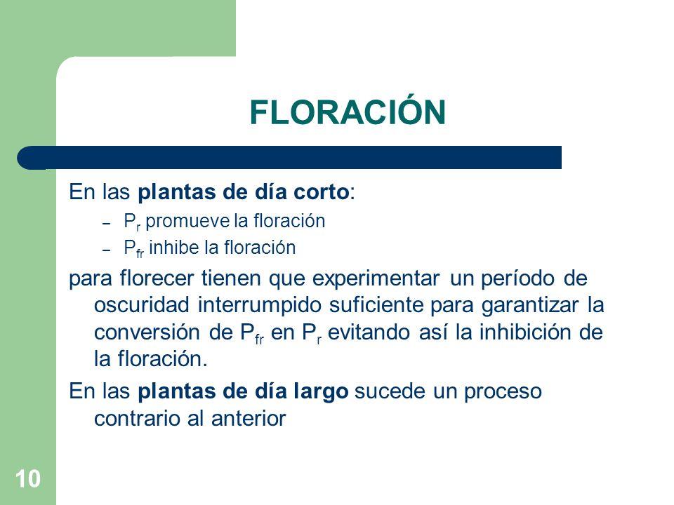 FLORACIÓN En las plantas de día corto: