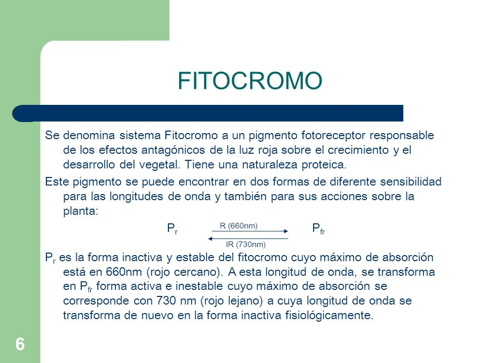 FITOCROMO