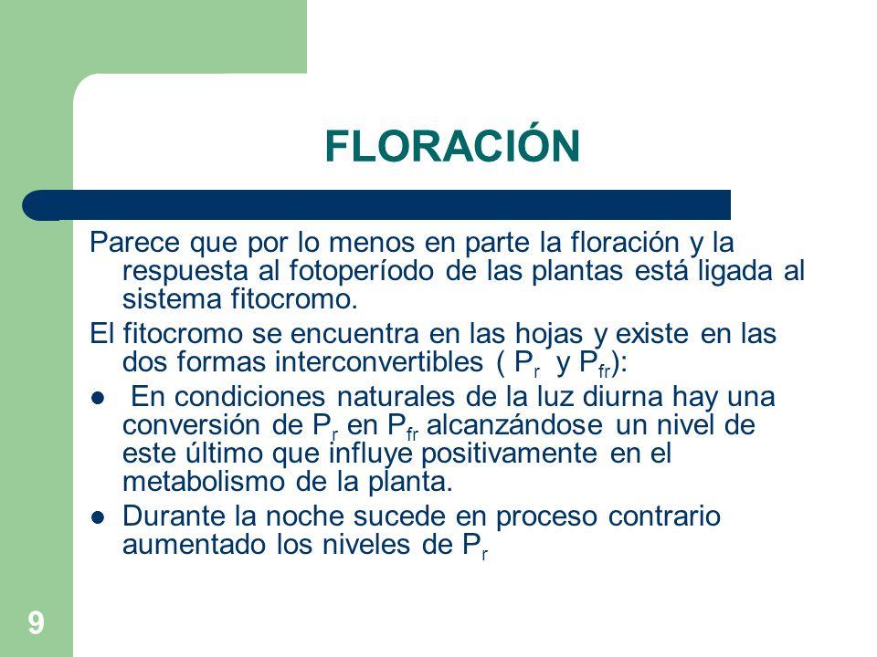 FLORACIÓN Parece que por lo menos en parte la floración y la respuesta al fotoperíodo de las plantas está ligada al sistema fitocromo.