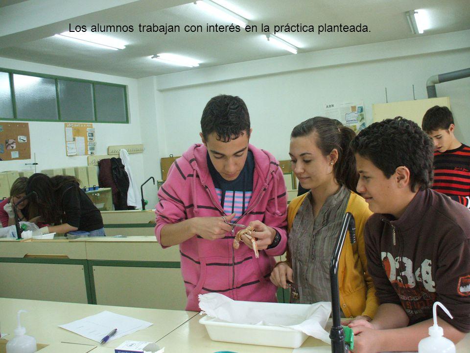 Los alumnos trabajan con interés en la práctica planteada.