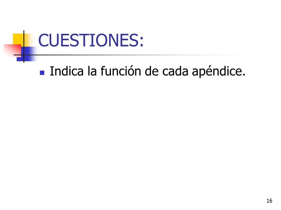 CUESTIONES: Indica la función de cada apéndice.