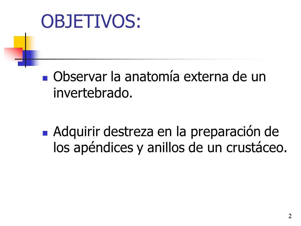 OBJETIVOS: Observar la anatomía externa de un invertebrado.
