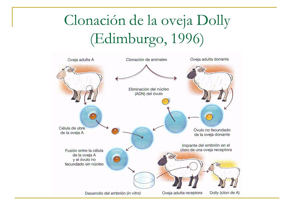 Clonación de la oveja Dolly (Edimburgo, 1996)