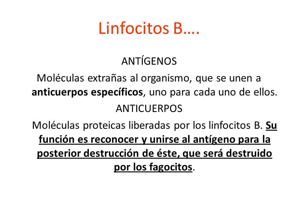 Linfocitos B…. ANTÍGENOS