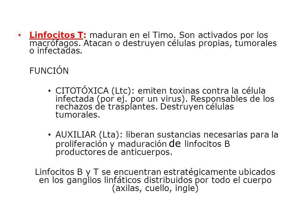 Linfocitos T: maduran en el Timo. Son activados por los macrófagos