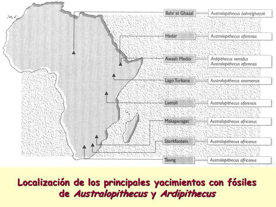 Localización de los principales yacimientos con fósiles de Australopithecus y Ardipithecus
