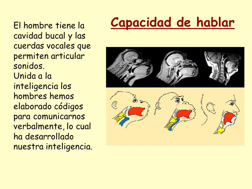 Capacidad de hablar El hombre tiene la cavidad bucal y las cuerdas vocales que permiten articular sonidos.