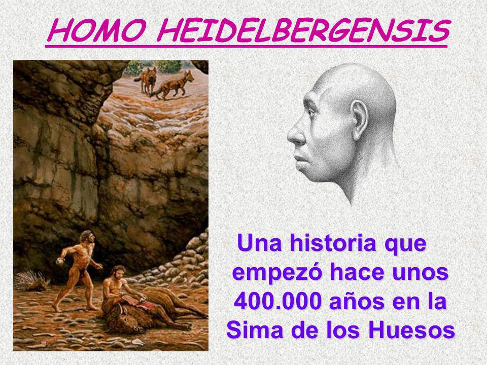 HOMO HEIDELBERGENSIS Una historia que empezó hace unos 400.000 años en la Sima de los Huesos