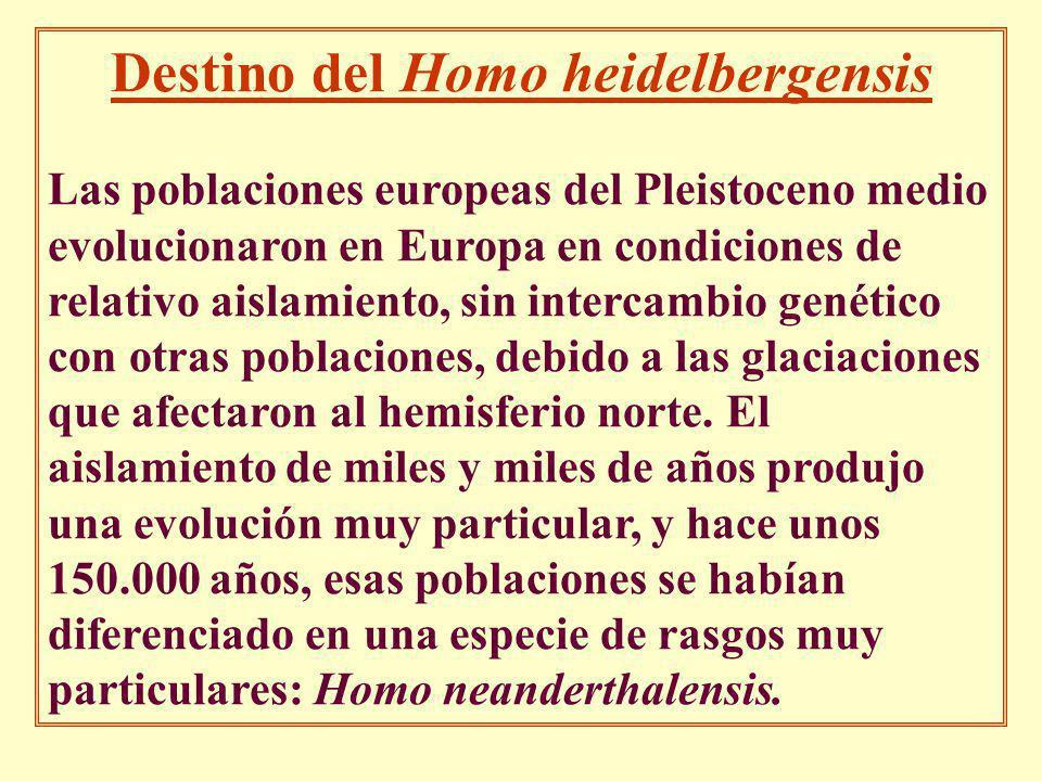 Destino del Homo heidelbergensis