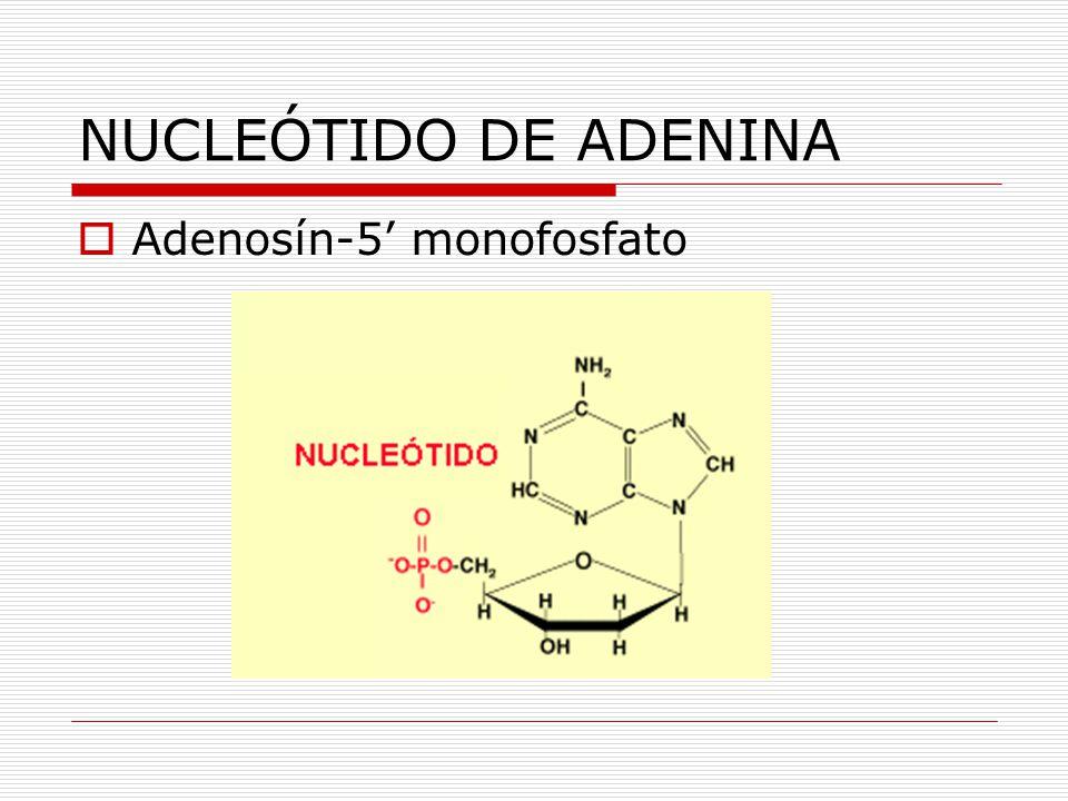 NUCLEÓTIDO DE ADENINA Adenosín-5' monofosfato