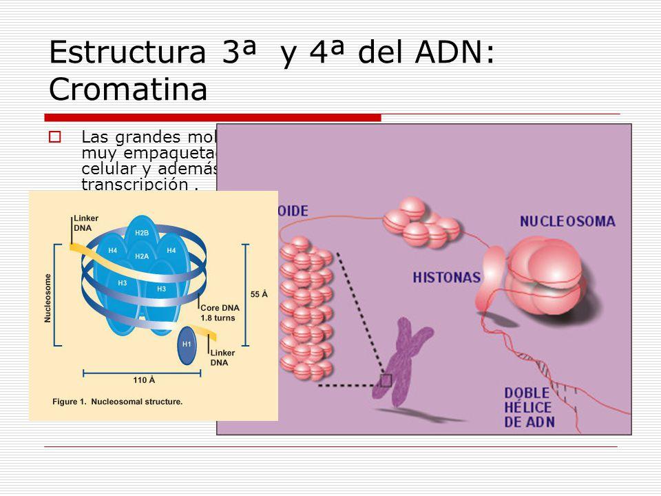 Estructura 3ª y 4ª del ADN: Cromatina