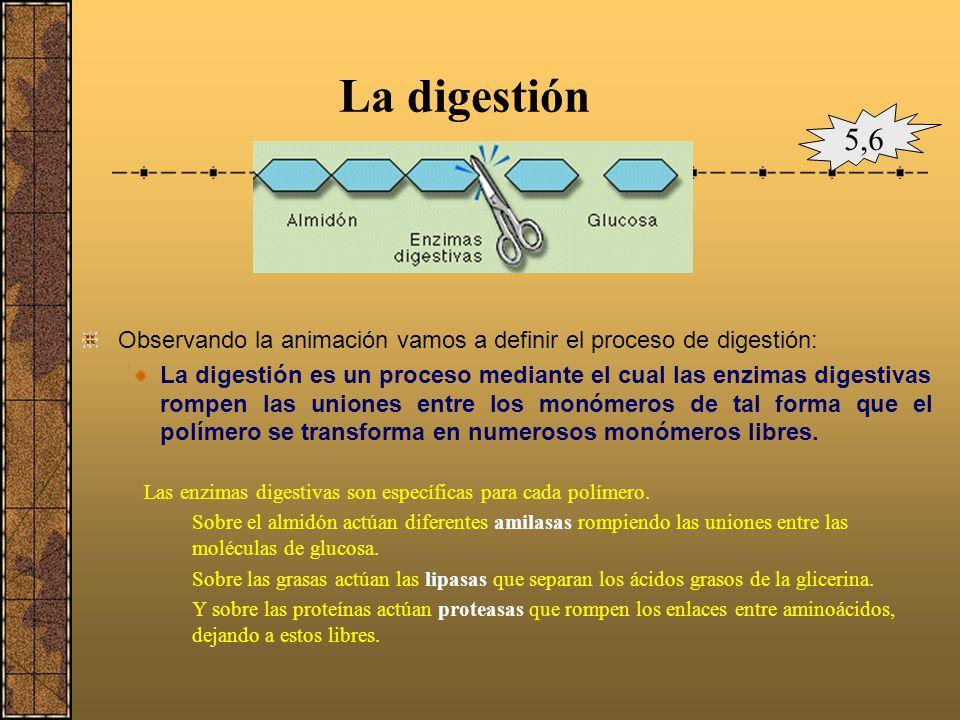 La digestión 5,6. Observando la animación vamos a definir el proceso de digestión: