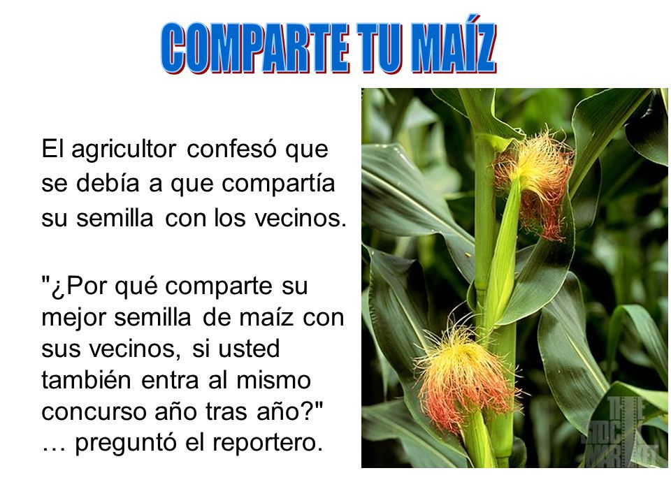 COMPARTE TU MAÍZ El agricultor confesó que se debía a que compartía su semilla con los vecinos.