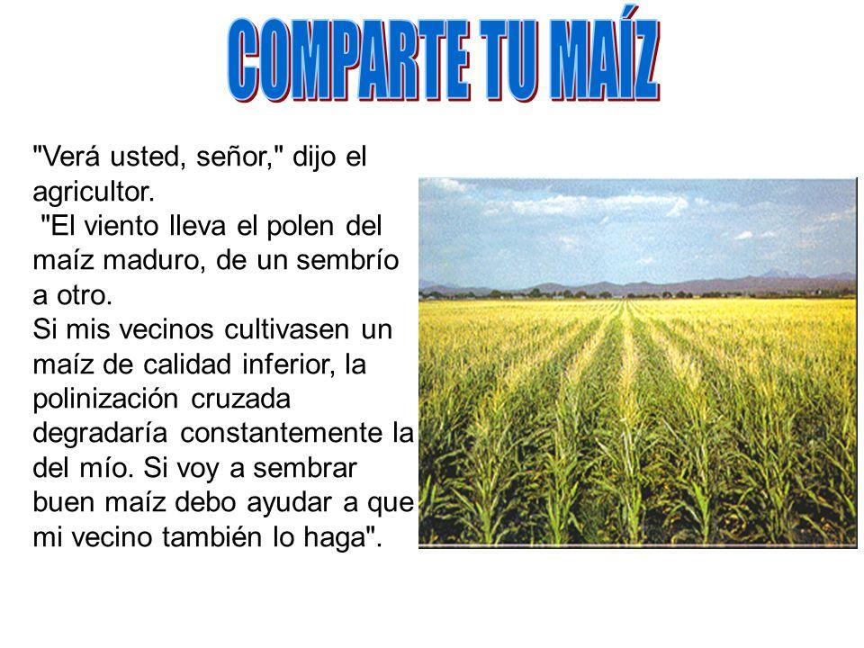 COMPARTE TU MAÍZ Verá usted, señor, dijo el agricultor. El viento lleva el polen del maíz maduro, de un sembrío a otro.