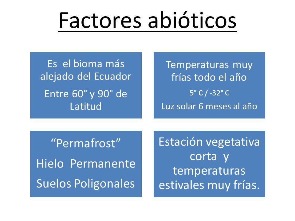 Factores abióticos Es el bioma más alejado del Ecuador