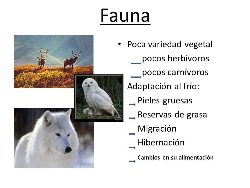 Fauna Poca variedad vegetal pocos herbívoros pocos carnívoros
