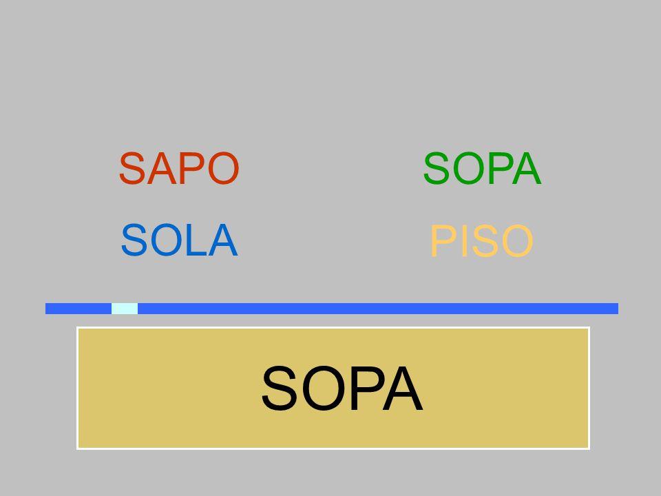 SAPO SOPA SOLA PISO SOPA