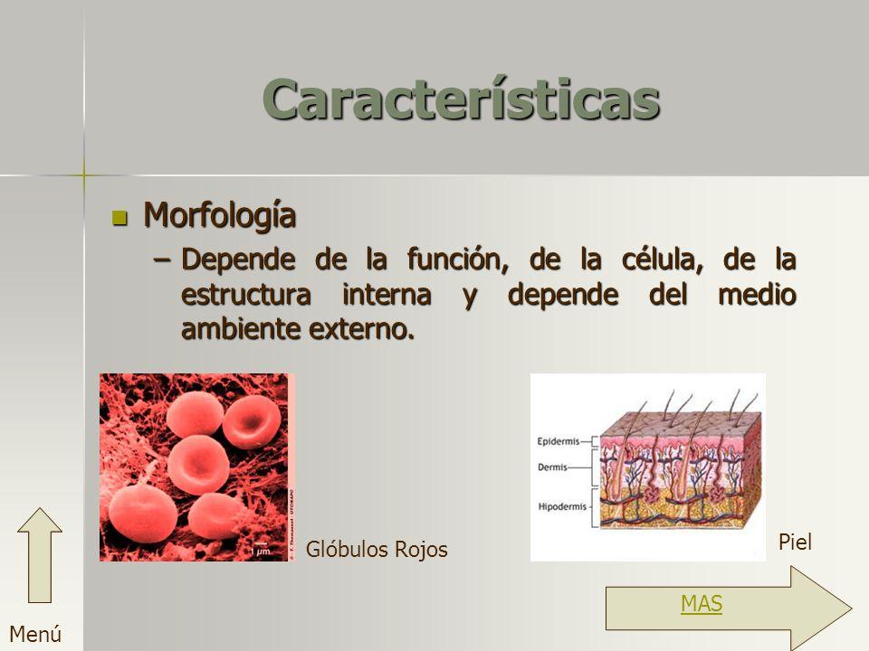Características Morfología
