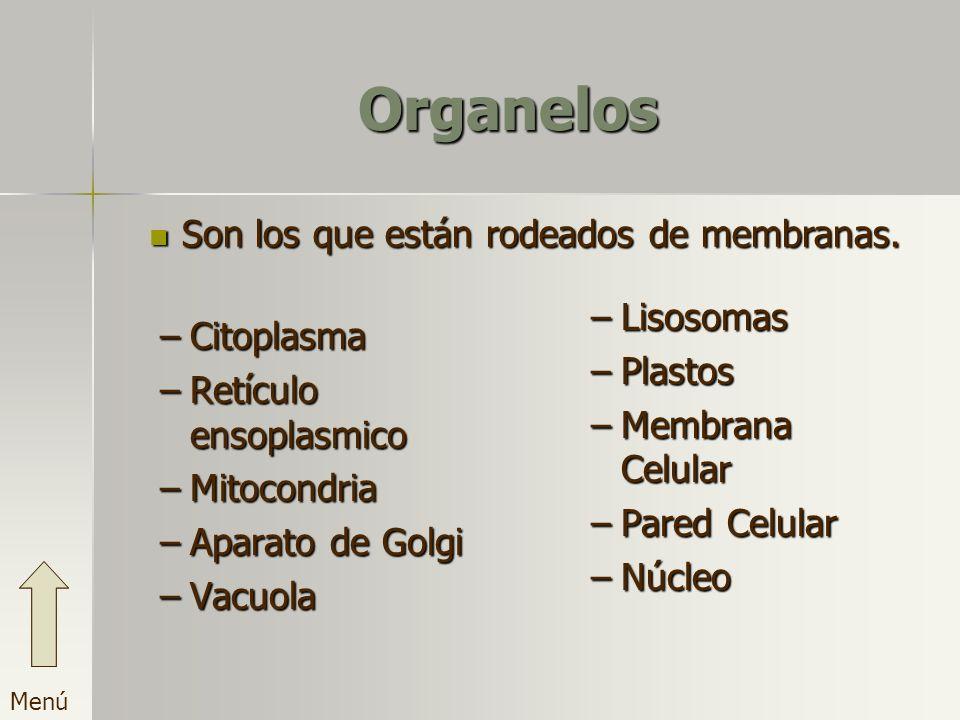 Organelos Son los que están rodeados de membranas. Lisosomas