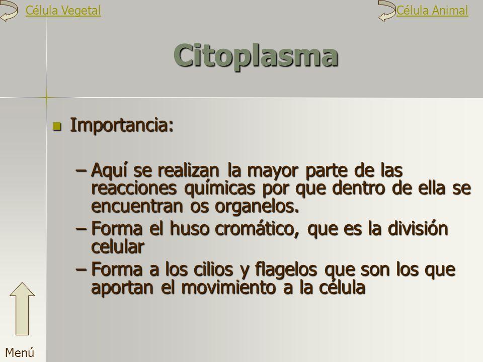 Citoplasma Importancia: