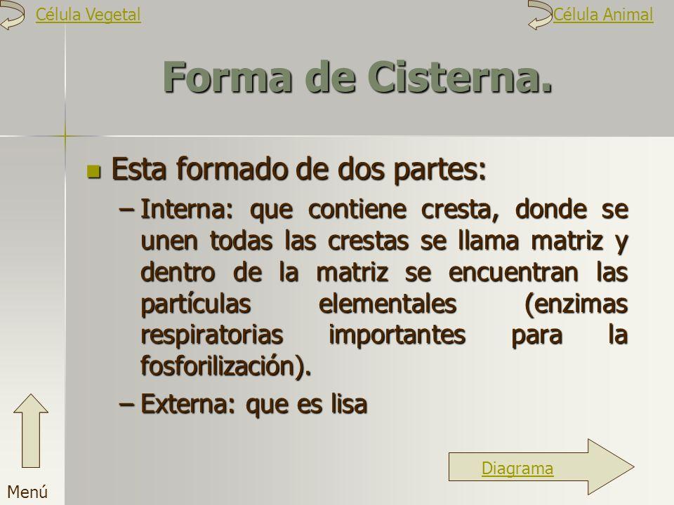 Forma de Cisterna. Esta formado de dos partes: