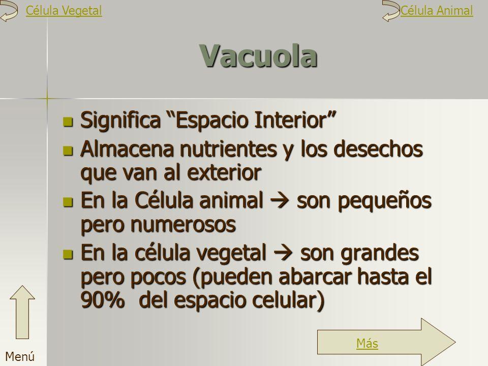Vacuola Significa Espacio Interior