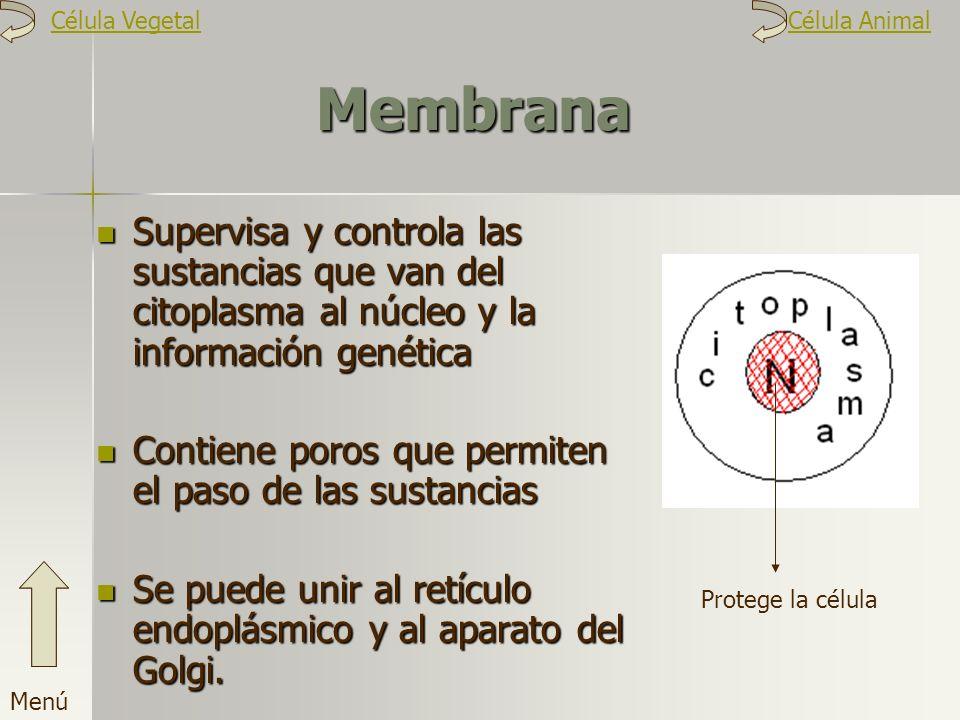 Célula Vegetal Célula Animal. Membrana. Supervisa y controla las sustancias que van del citoplasma al núcleo y la información genética.