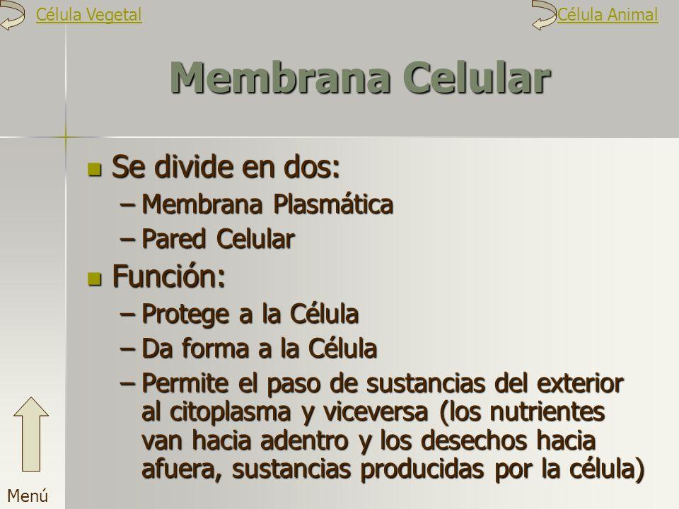 Membrana Celular Se divide en dos: Función: Membrana Plasmática