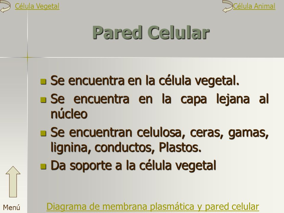 Pared Celular Se encuentra en la célula vegetal.