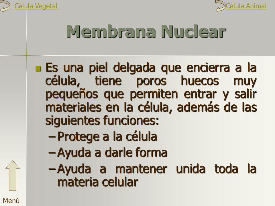 Célula Vegetal Célula Animal. Membrana Nuclear.