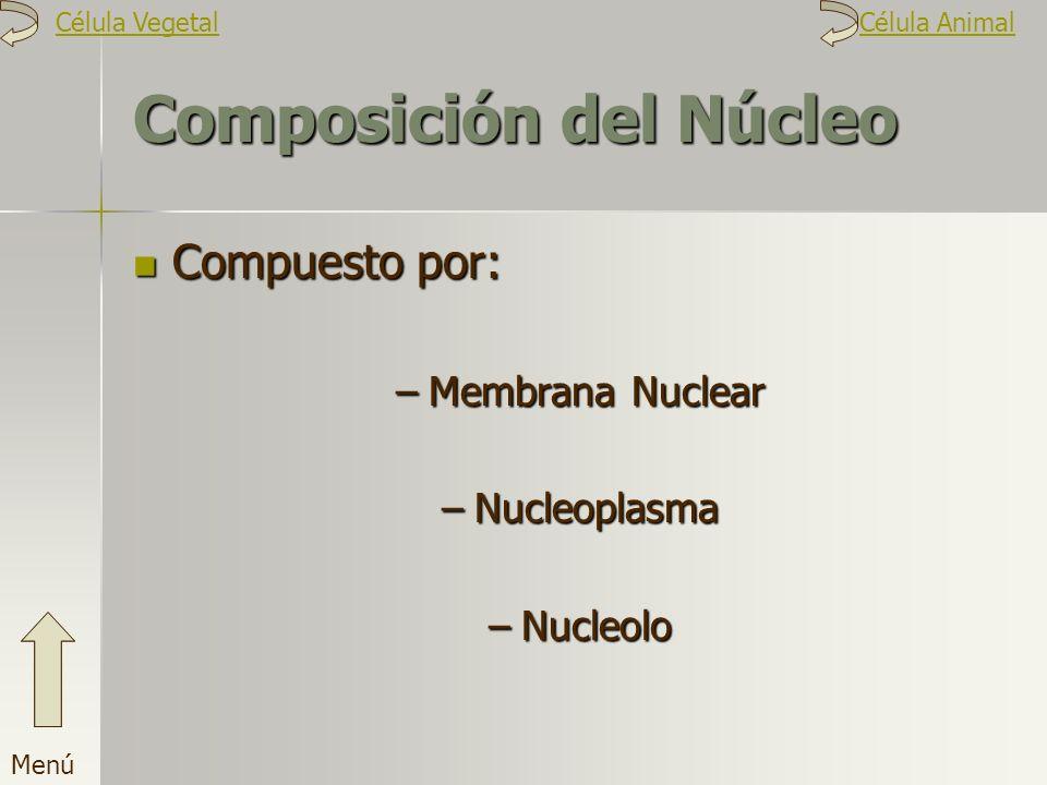 Composición del Núcleo