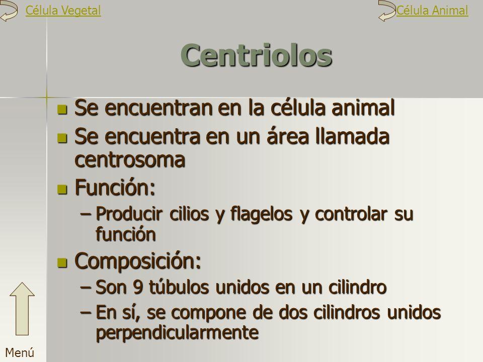 Centriolos Se encuentran en la célula animal