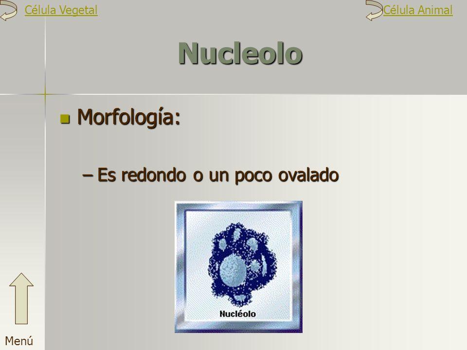 Nucleolo Morfología: Es redondo o un poco ovalado Célula Vegetal