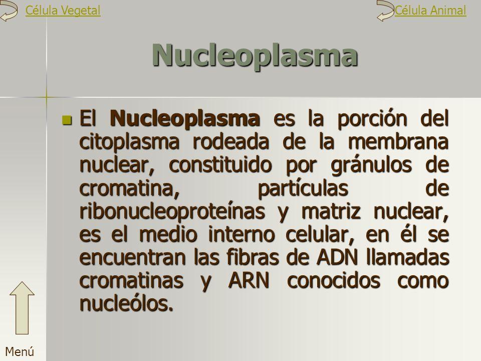 Célula Vegetal Célula Animal. Nucleoplasma.