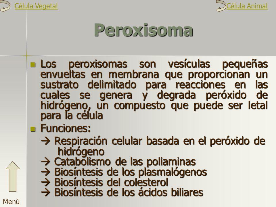 Célula Vegetal Célula Animal. Peroxisoma.