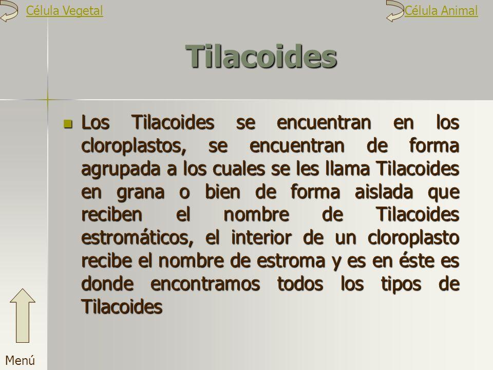Célula Vegetal Célula Animal. Tilacoides.