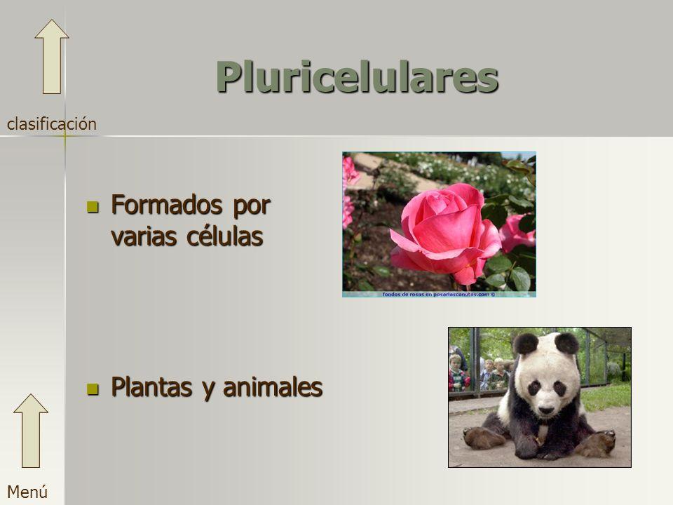 Pluricelulares Formados por varias células Plantas y animales