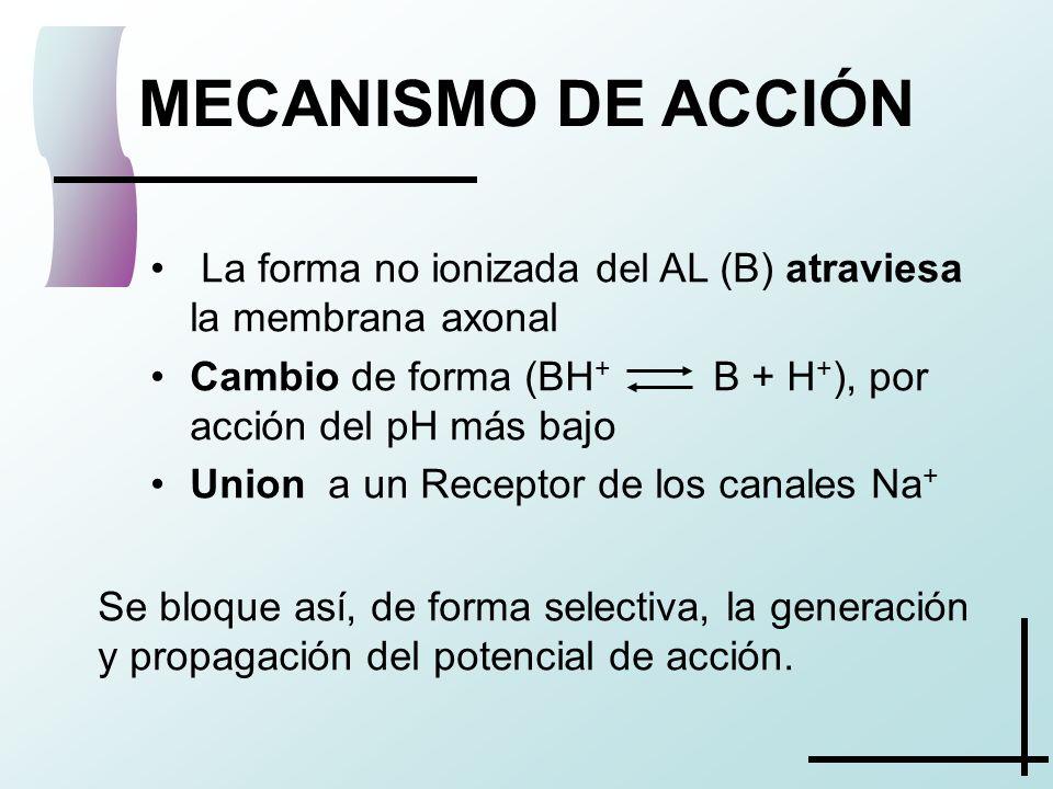 MECANISMO DE ACCIÓN La forma no ionizada del AL (B) atraviesa la membrana axonal. Cambio de forma (BH+ B + H+), por acción del pH más bajo.