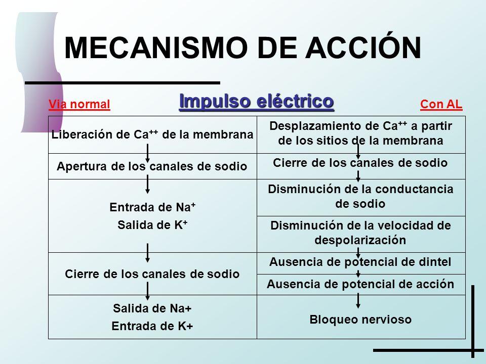 MECANISMO DE ACCIÓN Impulso eléctrico Ausencia de potencial de acción