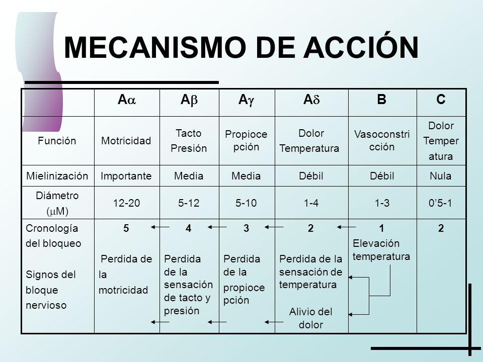 MECANISMO DE ACCIÓN A A A A C B 2
