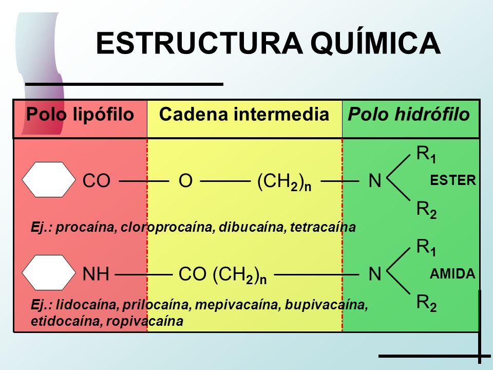 ESTRUCTURA QUÍMICA R1 N R2 CO (CH2)n NH O (CH2)n Polo hidrófilo