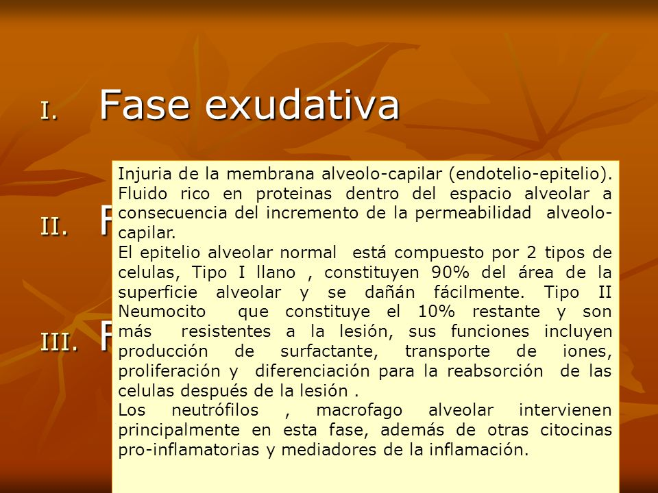 Fase exudativa Fase proliferativa Fase fibrosis