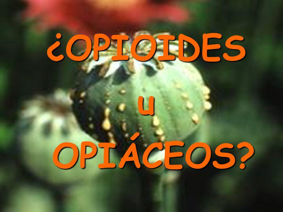 ¿OPIOIDES u OPIÁCEOS