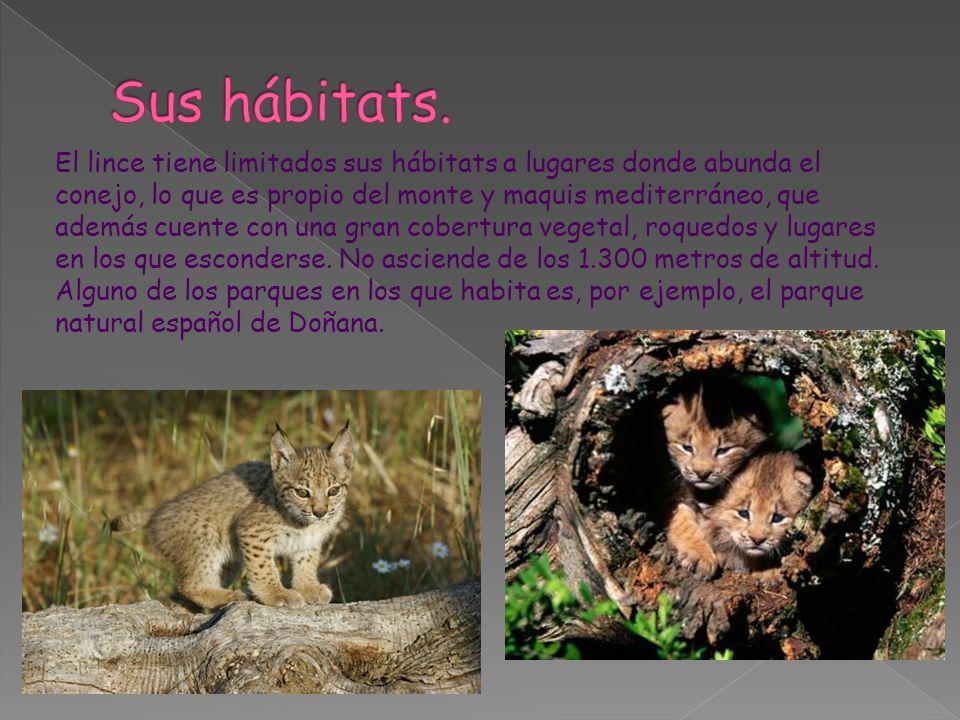 Sus hábitats.
