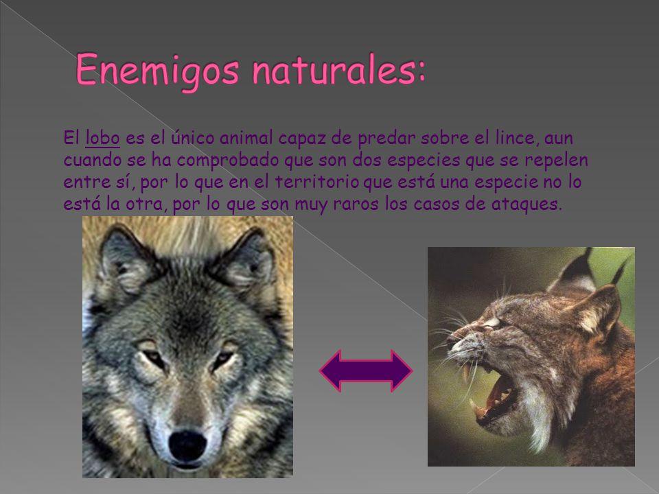 Enemigos naturales: