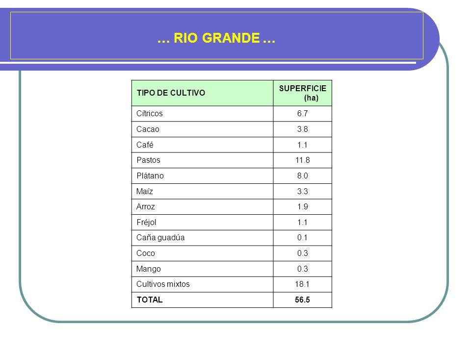 … RIO GRANDE … TIPO DE CULTIVO SUPERFICIE (ha) Cítricos 6.7 Cacao 3.8