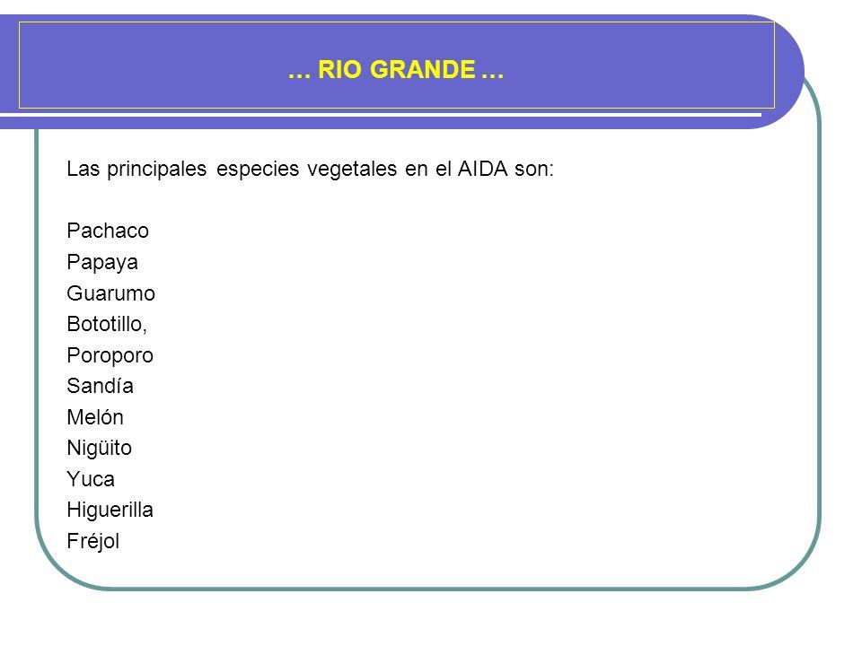 … RIO GRANDE … Las principales especies vegetales en el AIDA son: